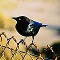 Bird's Eye by Eric Tressler
