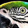 Bird's Eye View by Lisa Renee Ludlum