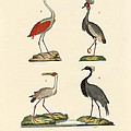 Birds From Hot Countries by Splendid Art Prints