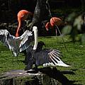 Birds Gather by Linda Kerkau