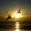 Birds Gathering At Sunset by Steve Kearns
