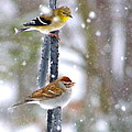 Birds In A Snowstorm by Jean Wright