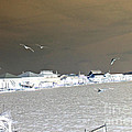 Birds In Flight Over Lafitte Bay by Marian Bell