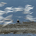 Birds In Flight by Tom Slater