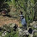 Birds In Florida by Linda Kerkau