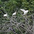 Birds In The Brush by Linda Kerkau