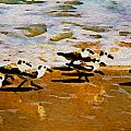 Birds In The Surf by Alice Gipson