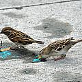 Birds Like Cotton Candy by Teresa Blanton