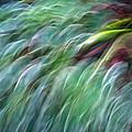Birds by Munir Alawi