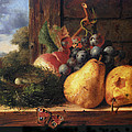 Birds Nest Butterfly And Fruit by Edward Ladell
