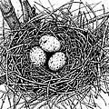 Birds Nest by Margaret Schons