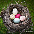 Bird's Nest With Easter Eggs by Edward Fielding