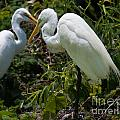 Birds Of A Feather by Dale Powell