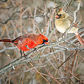 Birds Of A Feather by Peg Runyan