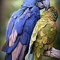 Birds Of A Feather by Stephen Stookey