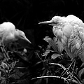Birds Of A Feather by Wayne Sherriff