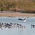 Birds Of Cutler Bay Wetlands 42 by Winston D Munnings