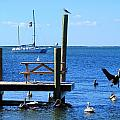 Birds Of Key Largo by R B Harper