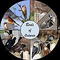 Birds Of Ontario by Davandra Cribbie