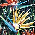 Birds Of Paradise  2   Sold by Karin  Dawn Kelshall- Best