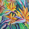 Birds Of Paradise by Summer Celeste