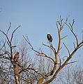 Birds Of Prey II by Bonfire Photography