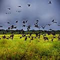 Birds Of The Wetlands V11 by Douglas Barnard
