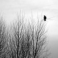 Birds Of Winter I by AJ  Schibig