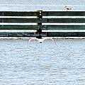 Birds On A Fence by Cathy Jourdan