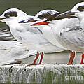Birds On A Ledge by Dawn Gari