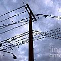 Birds On A Wire In Blue by Gregory Dyer