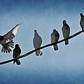 Birds On A Wire by Joe Carini