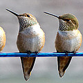 Birds On A Wire by Randy Hall
