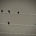 Birds On A Wire by Sherry Bowen