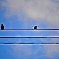Birds On A Wire by Tara Potts