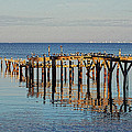Birds On Old Dock On The Bay by Michael Thomas