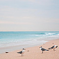 Birds On The Beach 0003 by Terrence Downing