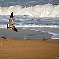 Birds On The Beach by Larry Ward