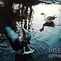 Birds On The Mill Pond by Laurie Eve Loftin