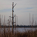 Birds On The River by Mechala Matthews