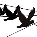 Birds On The Wire by Laura Pierre-Louis
