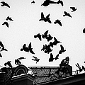 Birds Over City - Featured 3 by Alexander Senin