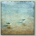 Birds Take Off Sequence by Eduardo Tavares