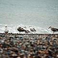 Birds by Teona Dzavashvili