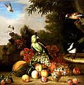Birds by Tobias Stranover