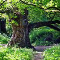 Birnam Wood Scotland by David Cairns