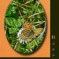 Birthday Greeting Card - American Copper Butterfly by Mother Nature