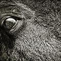 Bisan Eye by Patrick M Lynch