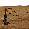 Bison And Windmill by David Lee Thompson