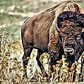 Bison by Carlos Diaz